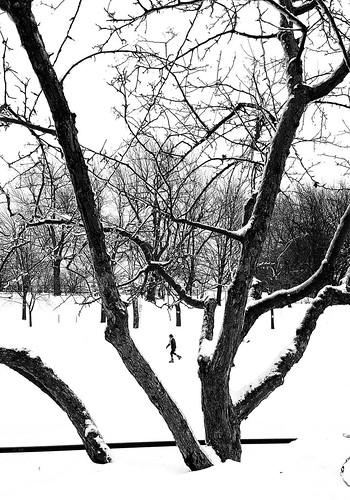 Parc La Fontaine Skating