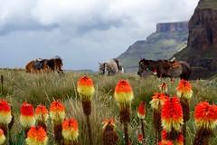 Lesotho...