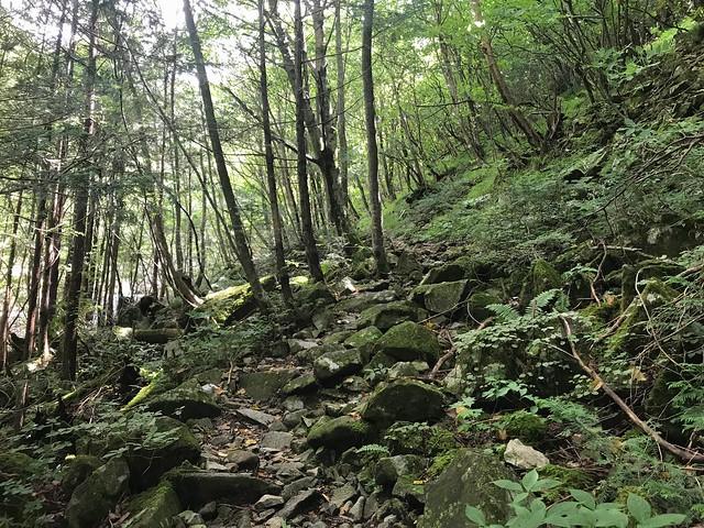 白草山 登山道
