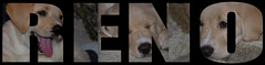 2018 RENO Puppy Pic TYPEFACE