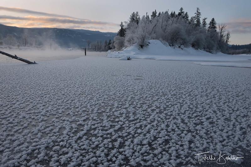 Frost flower field