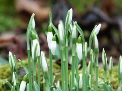 Hoffnung auf Frühling - Hope For Spring