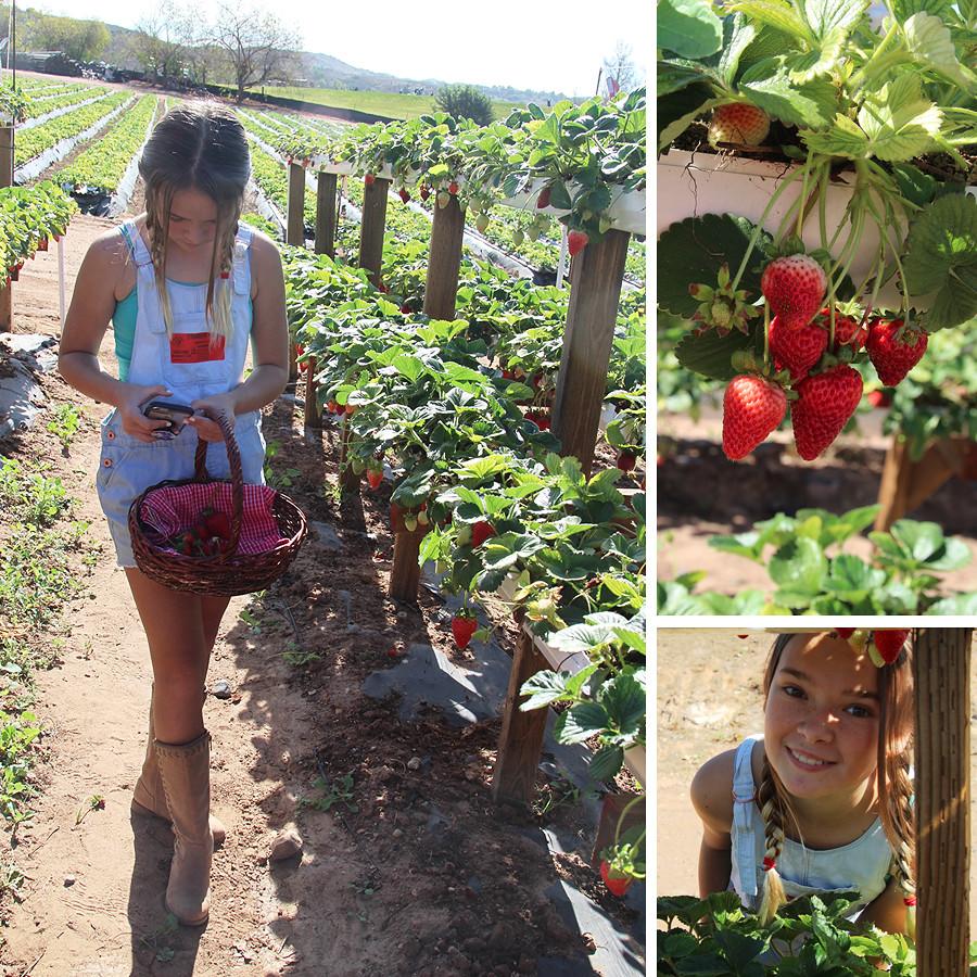strawberry-season-4