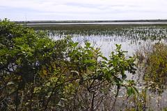Estação Ecológica de Águas Emendadas - Planaltina