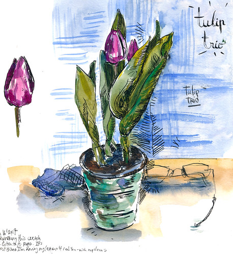Sketchbook #111: Tulip