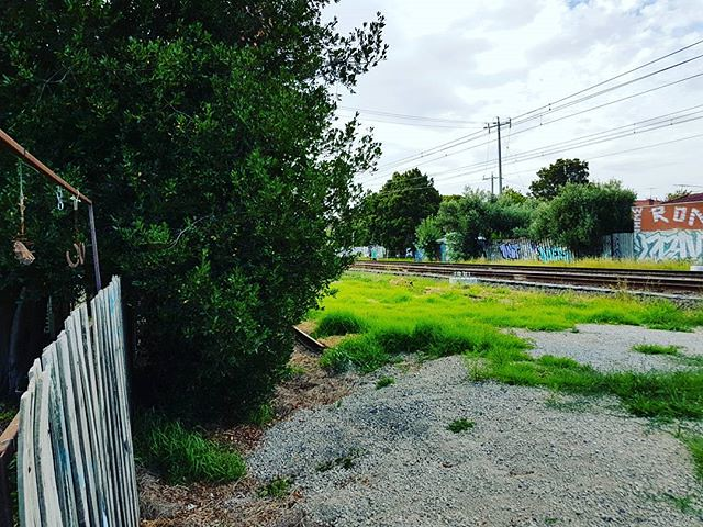 "Our bay tree, to be hacked off at fence-line by #skyrail to ""make room"" for bike path! Path to be located at far right!"