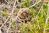 christian_s1 posted a photo:	Echidna at Tasman Peninsula
