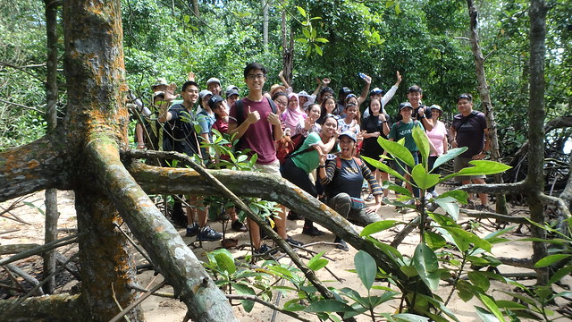 Sea Our Shores - Our Mangroovy Mangroves with Restore Ubin Mangroves (R.U.M.) Initiative