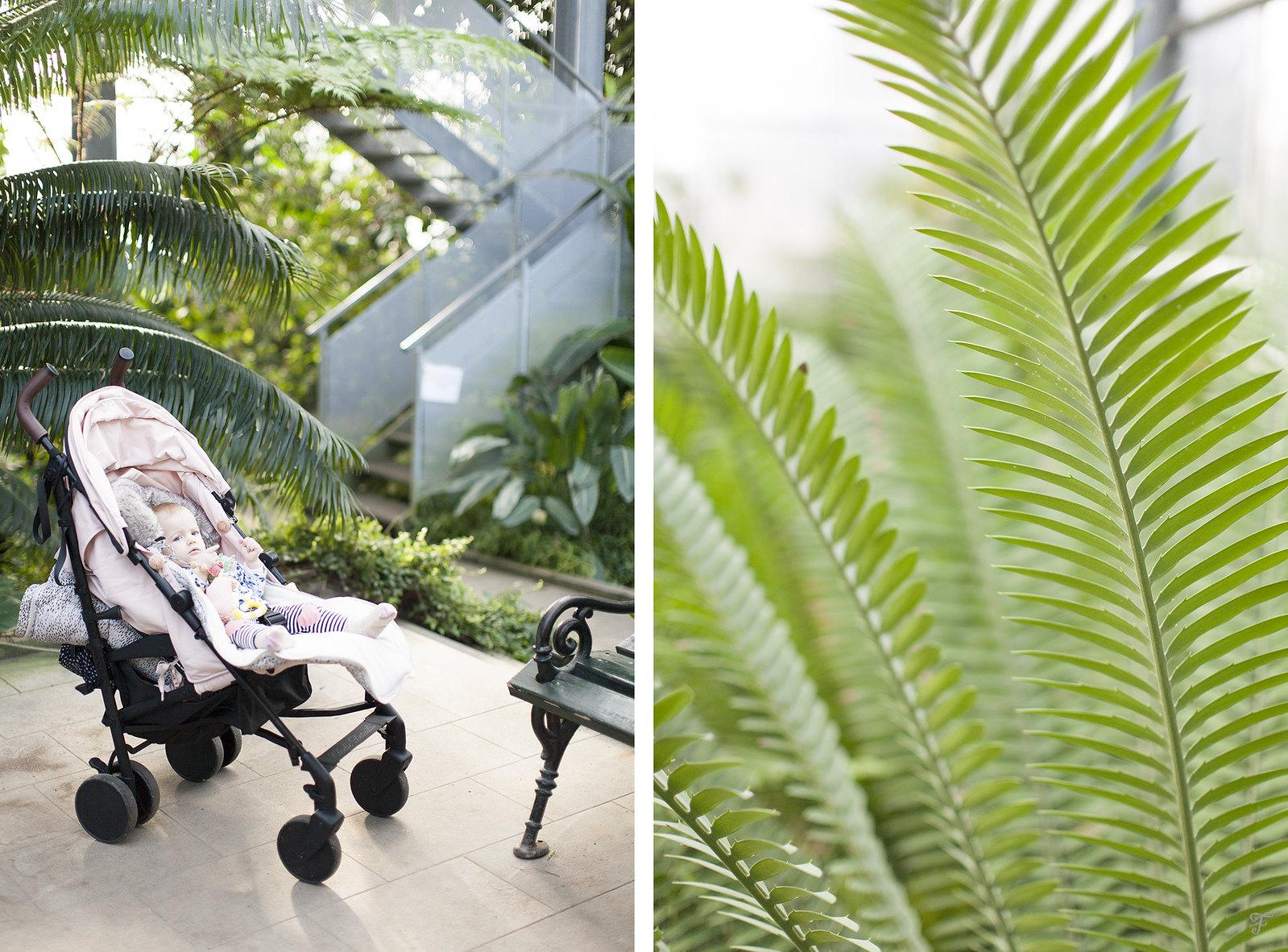 tropska soba botanični vrt ljubljana