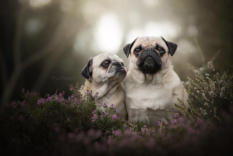 Heidelbeere und Oliver