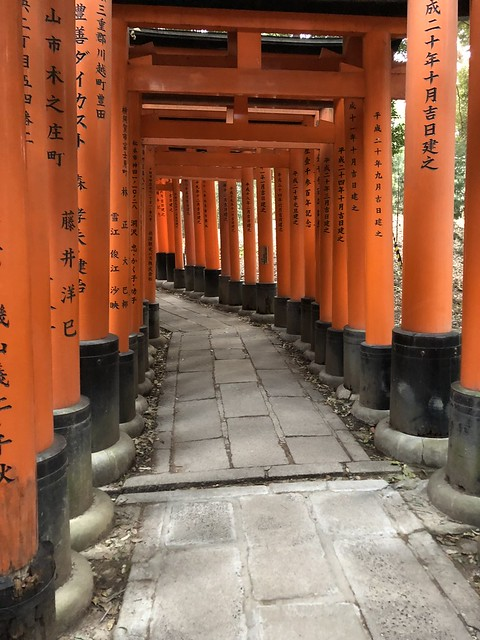 The back of the torii gates