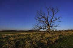 Dead Tree on Pea Ridge Battlefield