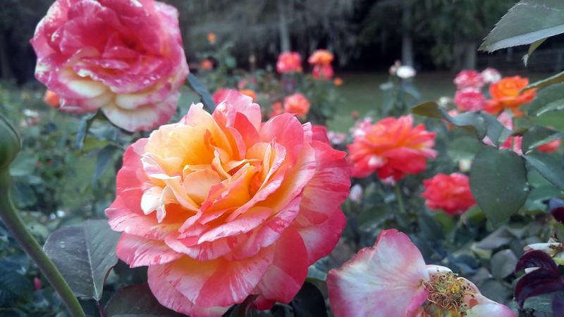 Edisto Memorial Park, Orangeburg, SC