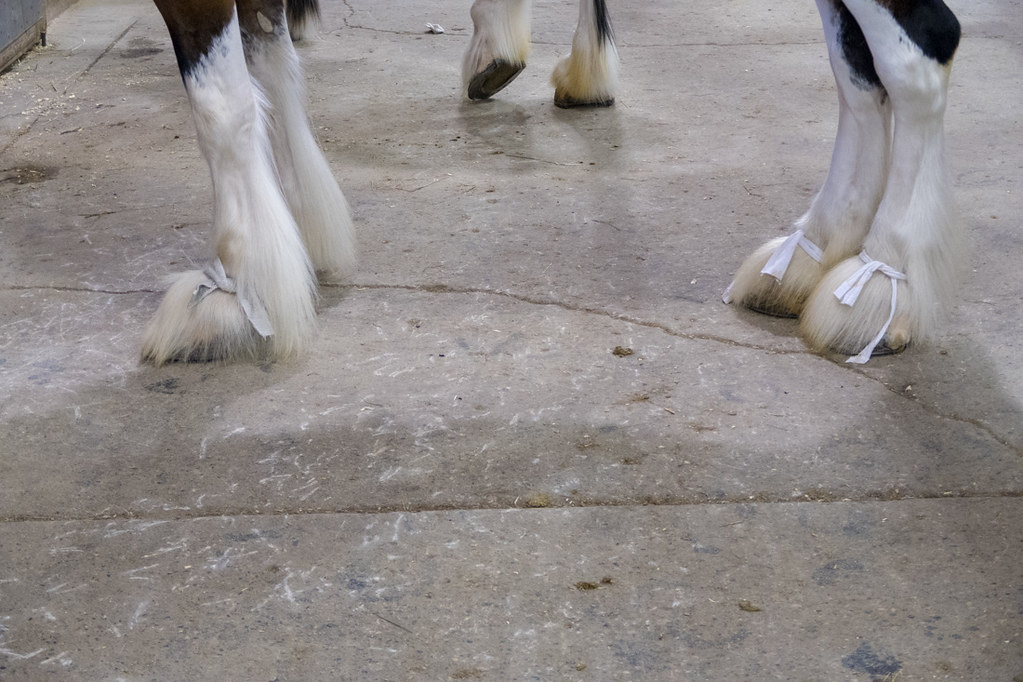 Bows on horse hooves