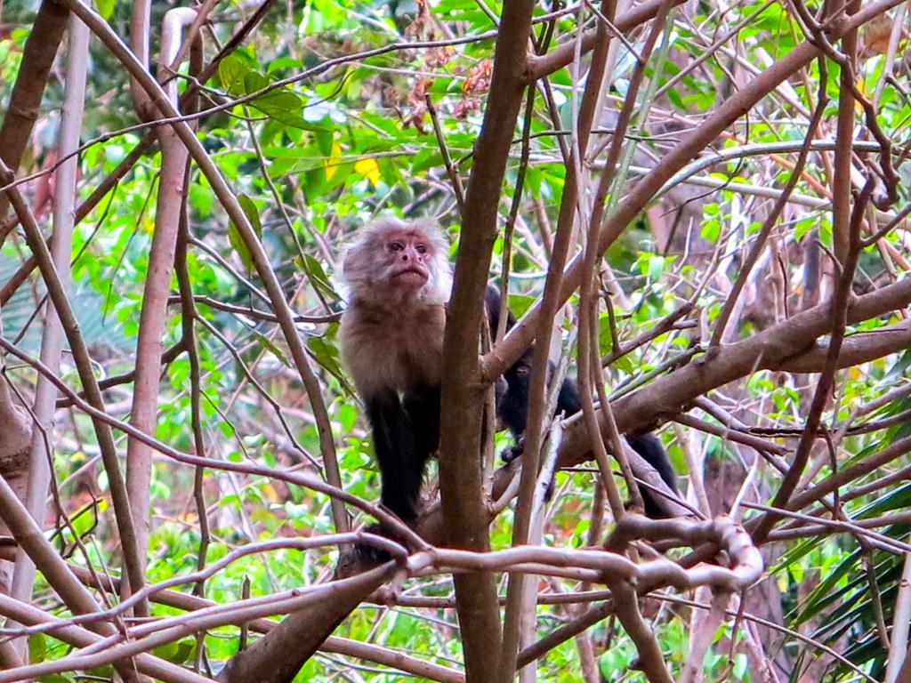 Fauna en Costa Rica