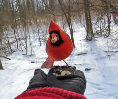 cardinal lands on hand