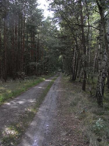 20100824 276 0104 Jakobus Wald Weg