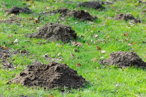 Range of (mole)hills, Bridgnorth