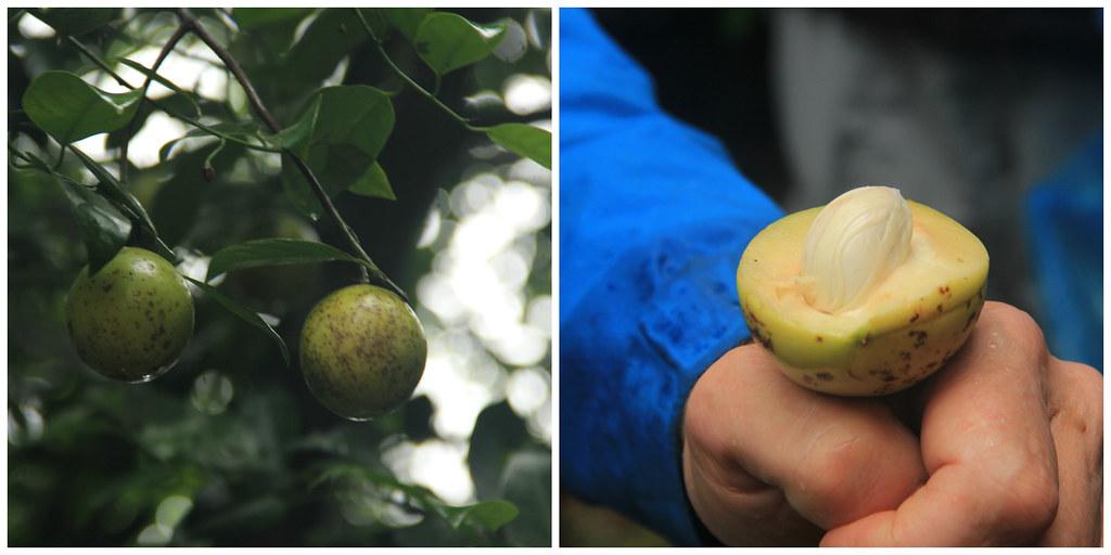 Nutmeg, Abraham's Spice Garden, Kumily