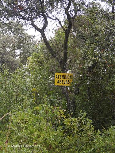 """Spaanse bijen (Apis mellifera Iberica) bij imker Lee Morley """"pas op bijen"""""""