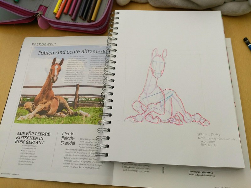 Sketching in the library: study of a foal