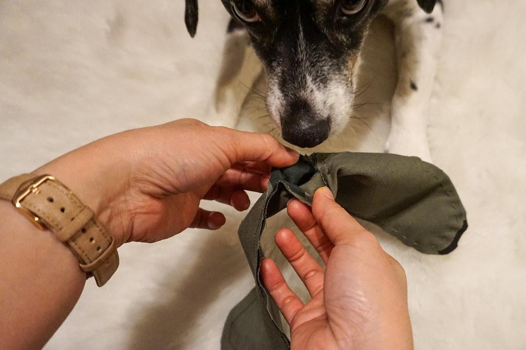 invert-fabric-dog-11