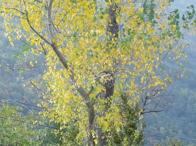 Un árbol de Biescas