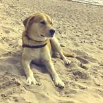 2011:09:06 12:31:59 - Hund, kurz vorm Umkippen