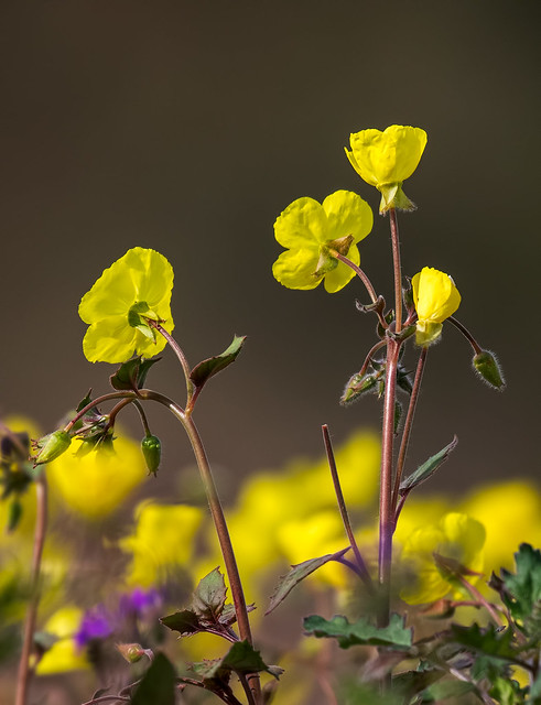 BBB-Wild-Flower-27-7D2-030417