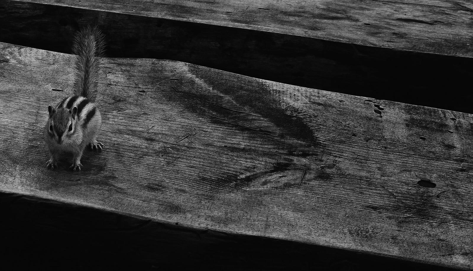 Бурундук на скамейке