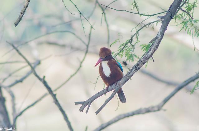 keoldeo-bharatpur-bird-sanctuary-1-3 (34)