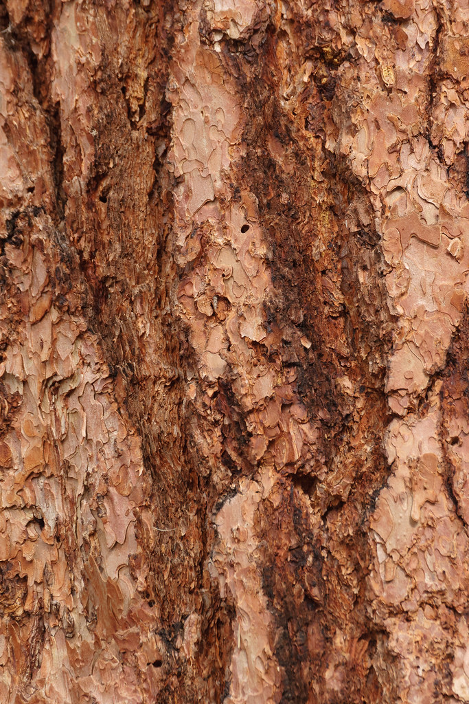Patterns in the bark of a tree near the Rio Grande in Rio Grande del Norte National Monument