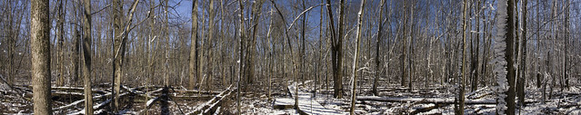 Fowler Woods State Nature Preserve