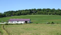 Amish Field Millersburg, OH