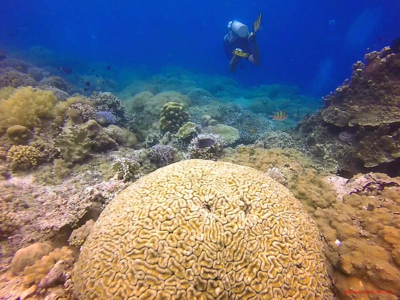Scuba Diving in Balicasag Island