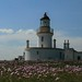 light house and sea thrift_