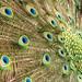 Percy's Many Eyes, 3.7.17