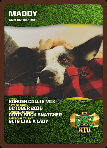 maddy puppy bowl xiv