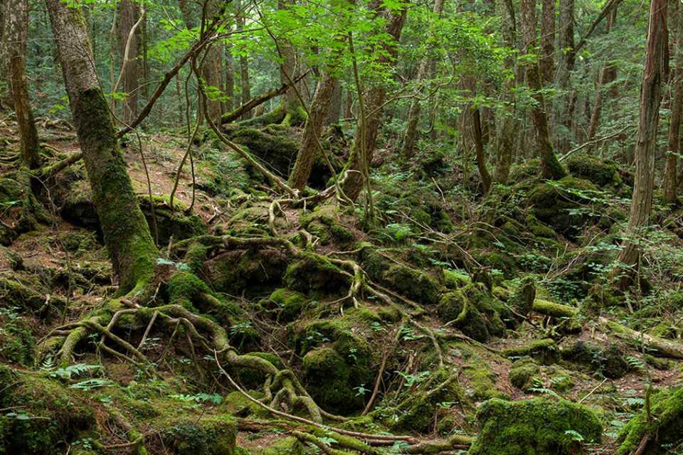 Aokigahara, el bosque de los suicidios de Japón