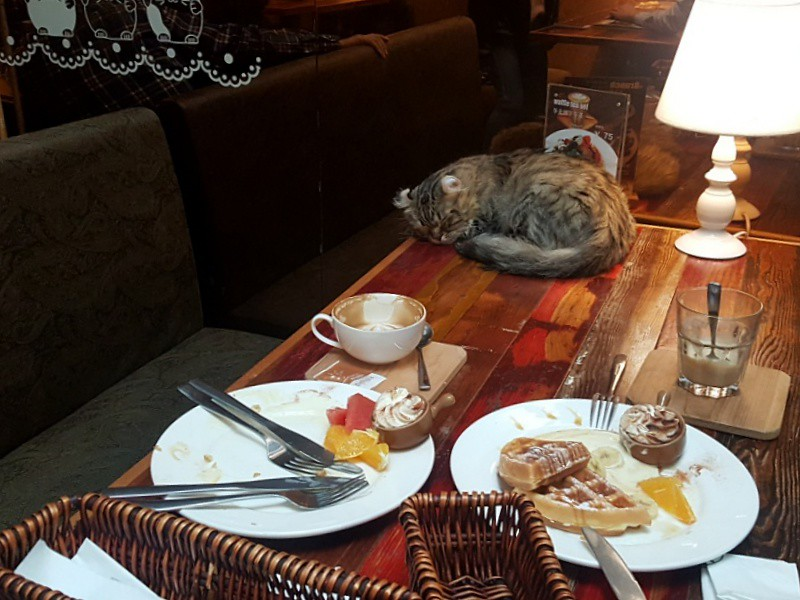 Tianzifang Cat Cafe
