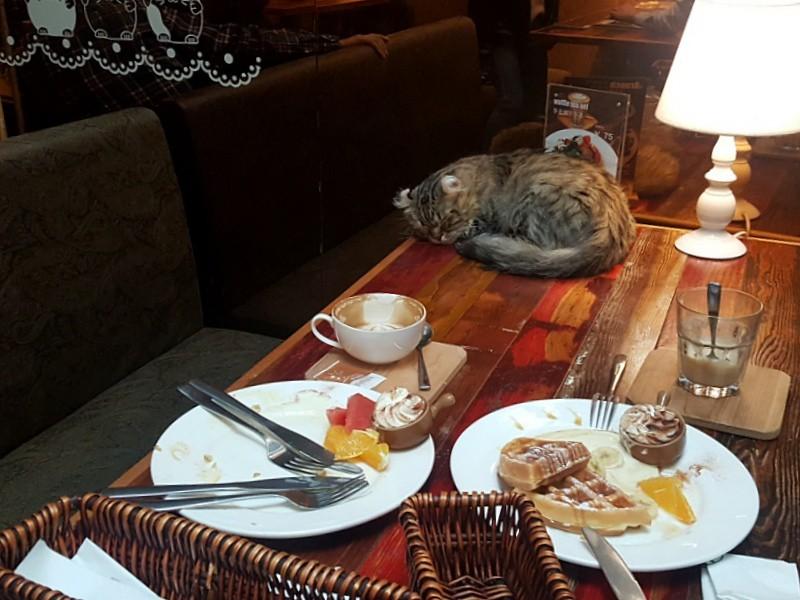 Tianzifang Cat Cafe