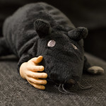 Feb 23 - Handy rat