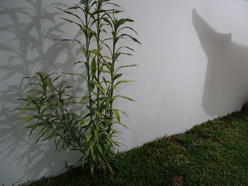 planta naturaleza