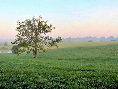 tree sycamore branches leaves morning mist colors pastel sky rural country pasture field grass farm land earth agriculture pond water summer solitary alone nature natural woods tower quiet peaceful tranquil serene hope positive charlottecourthouse charlottecounty virginia