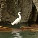 Sumidero Canyon: Heron por gert_vervoort