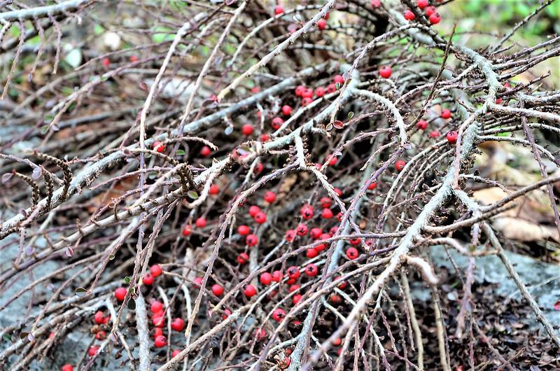 Berries 25.01.2018