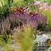 Zahrada u vzrostlého Jilmu 5