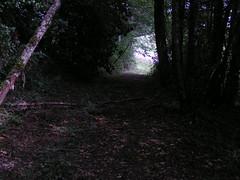20070903 13071 0710 Jakobus Wald Weg Hell Dunkel