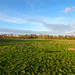 Chester meadows, 2018 Jan 17