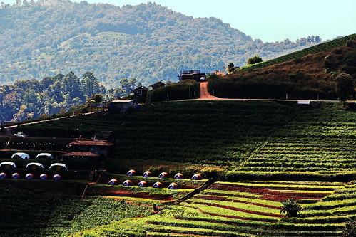 "chiangmai เชียงใหม่ countryside ชนบท field farm ทุ่งนา maerim แม่ริม monchaem ม่อนแจ่ม thailand ประเทศไทย เมืองไทย ""canon7dmk2"" ""earthasia"""